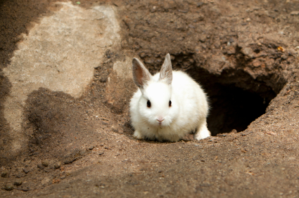 Beautiful white bunny rabbit sitting in front of burrow in ground